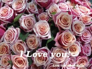 Quote - I love you!